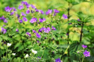 naturalne zioła prosto z natury